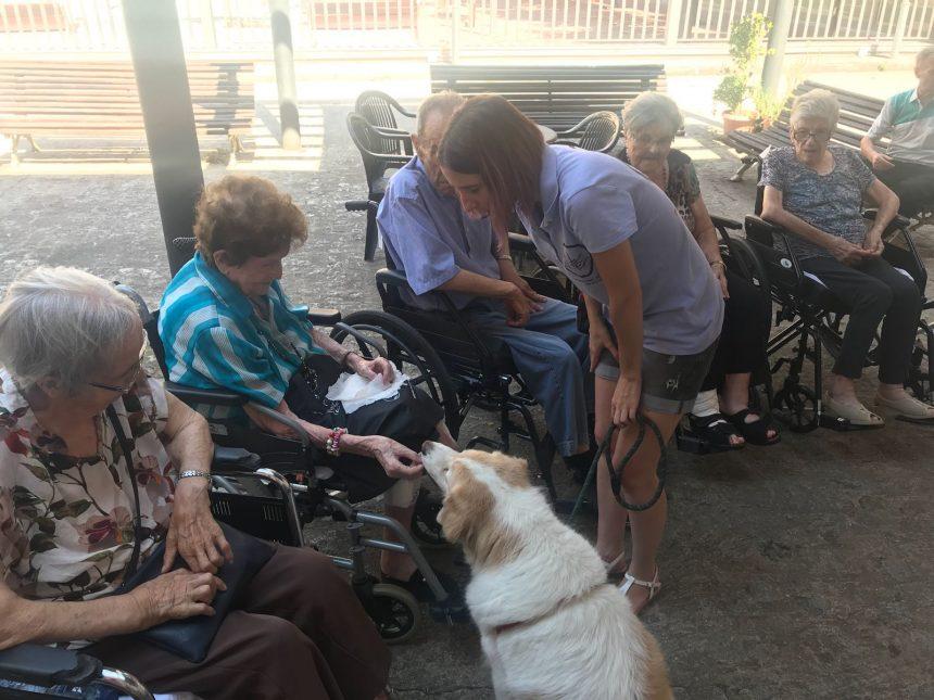 Teràpia gossos Residència la Creueta
