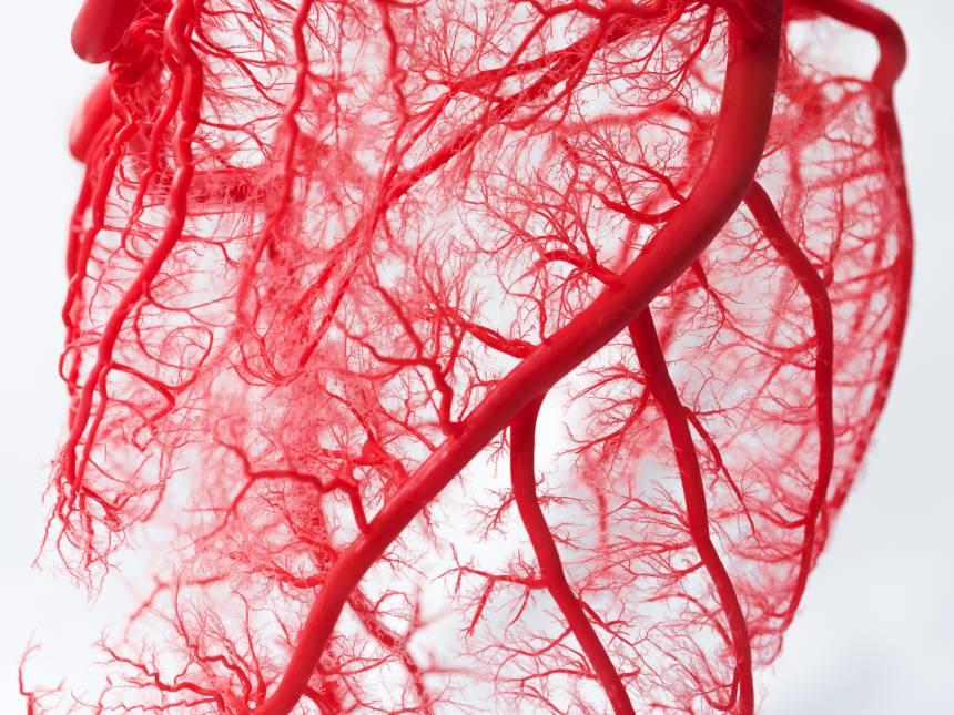 Artèries